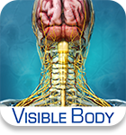 Visible Body Brain and Nervous Anatomy icon