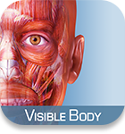 Visible Body Muscle Premium icon