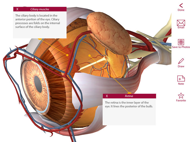 Anatomy & Physiology, eye anatomy