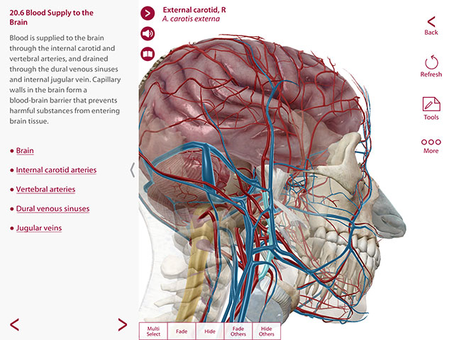 Anatomy & Physiology, 3D models of blood supply to the brain