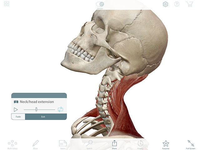Animation of head and neck extension
