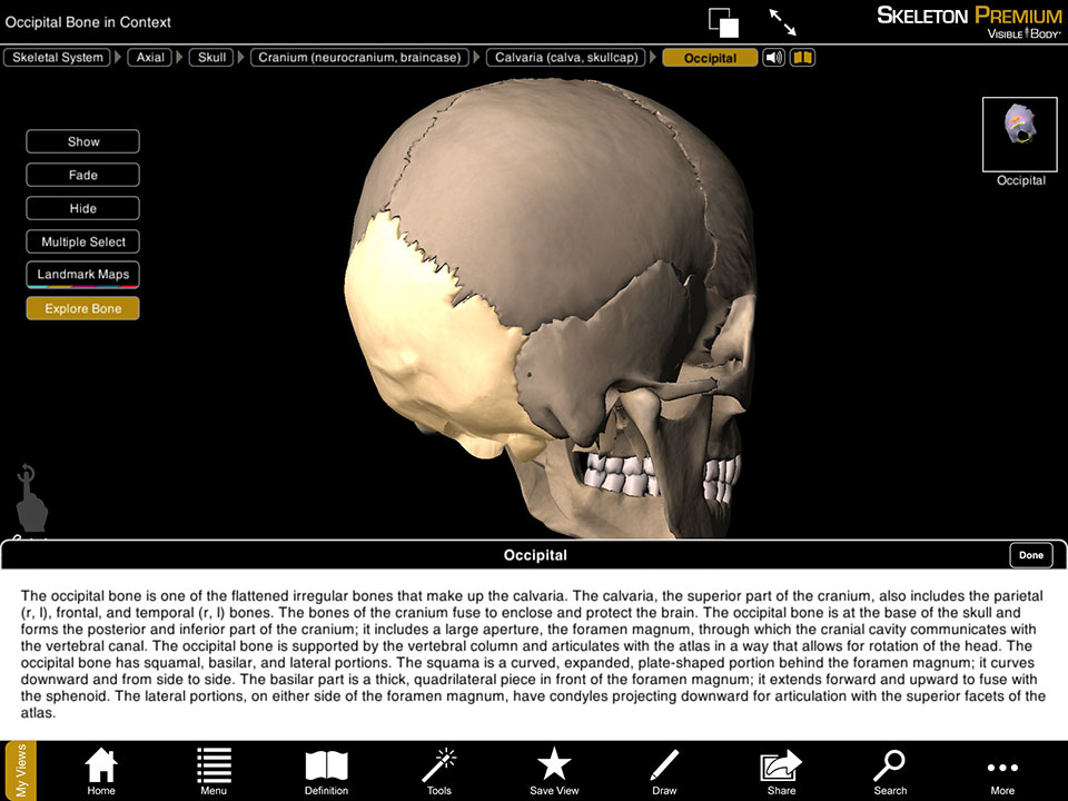 The bones of the skull and definition of the occipital bone
